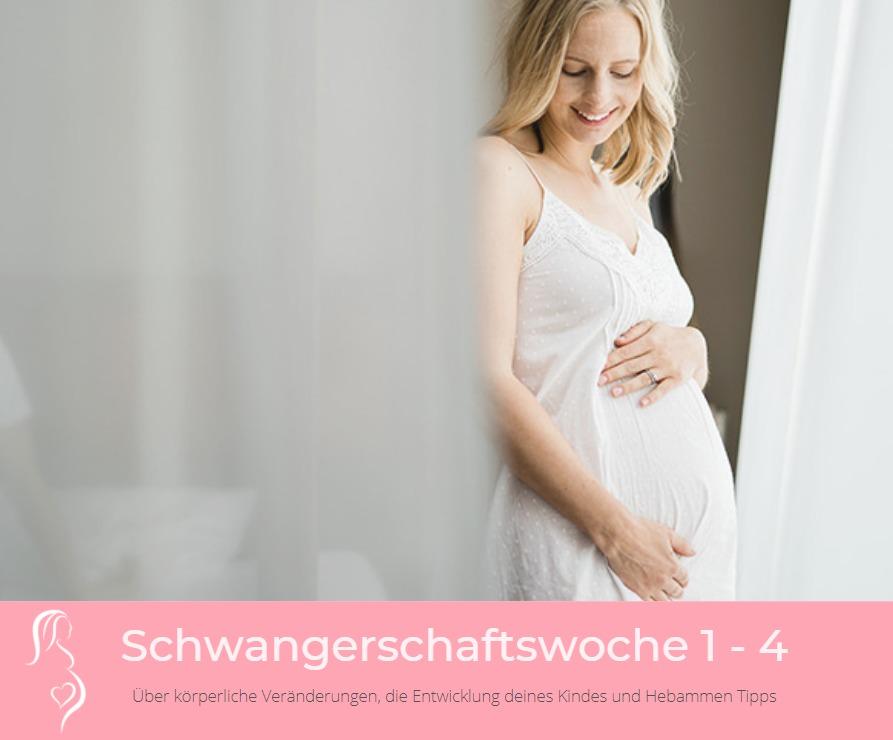 schwangerschaftswoche 1 bis 4